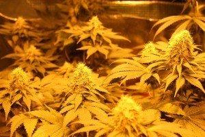 Cannabis legal in Deutschland